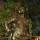 Förbannad av statyer?